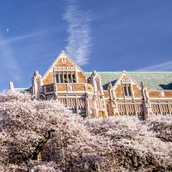 Image of UW campus building behind some cherry trees